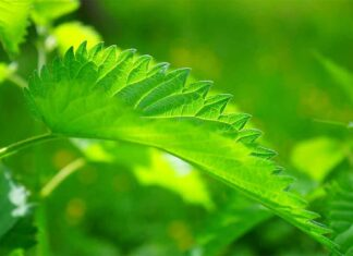 Propaquizafop, Bahan Aktif Herbisida Selektif